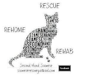 Pets for Adoption at Second Hand Siamese, in Oakwood, GA