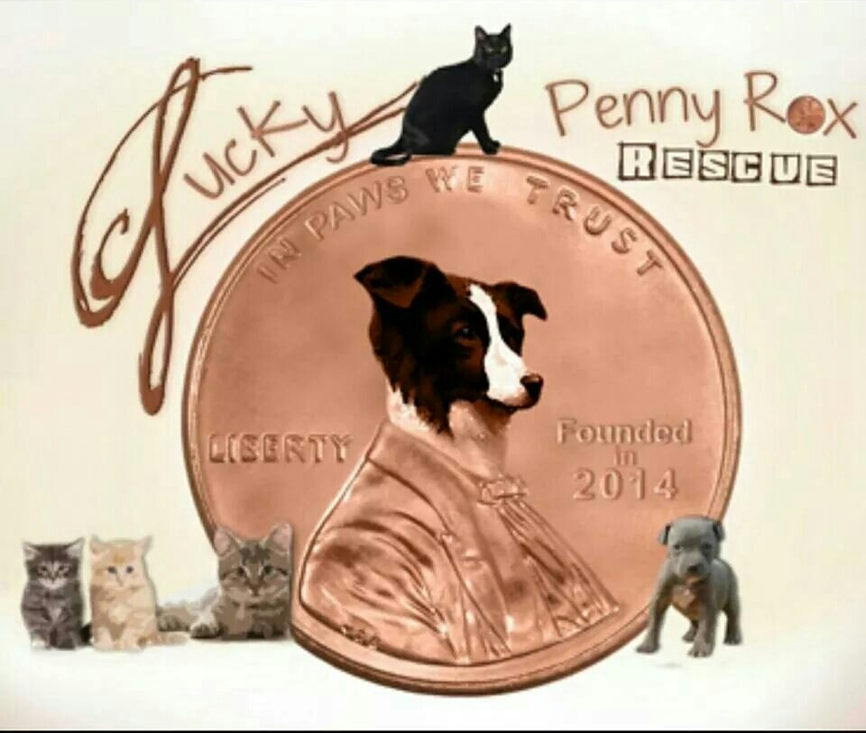 Lucky Penny Rox Rescue - Ft Bend County Tx