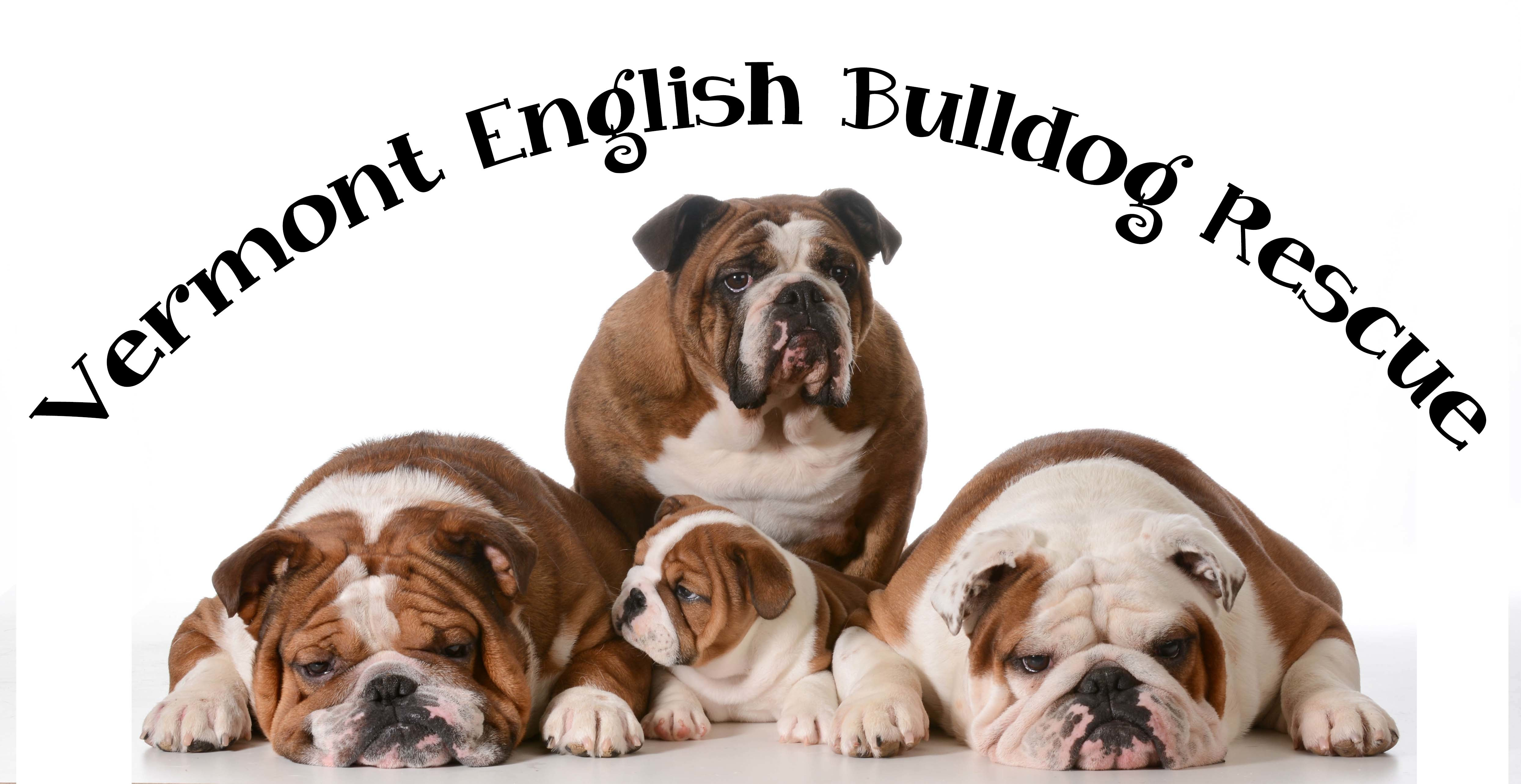 Vermont English Bulldog Rescue