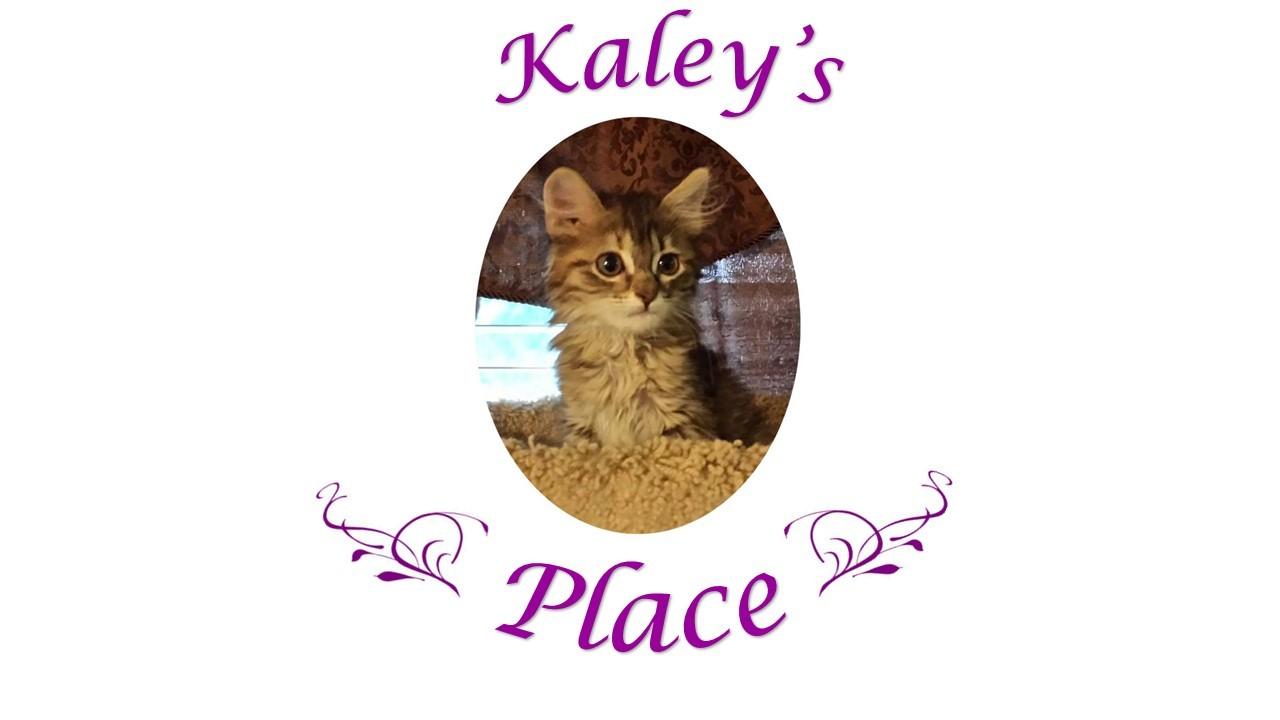 Kaleys Place