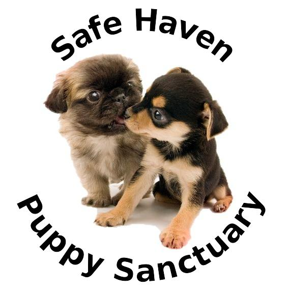 Pets for Adoption at Safe Haven Puppy Sanctuary, in Cookeville, TN