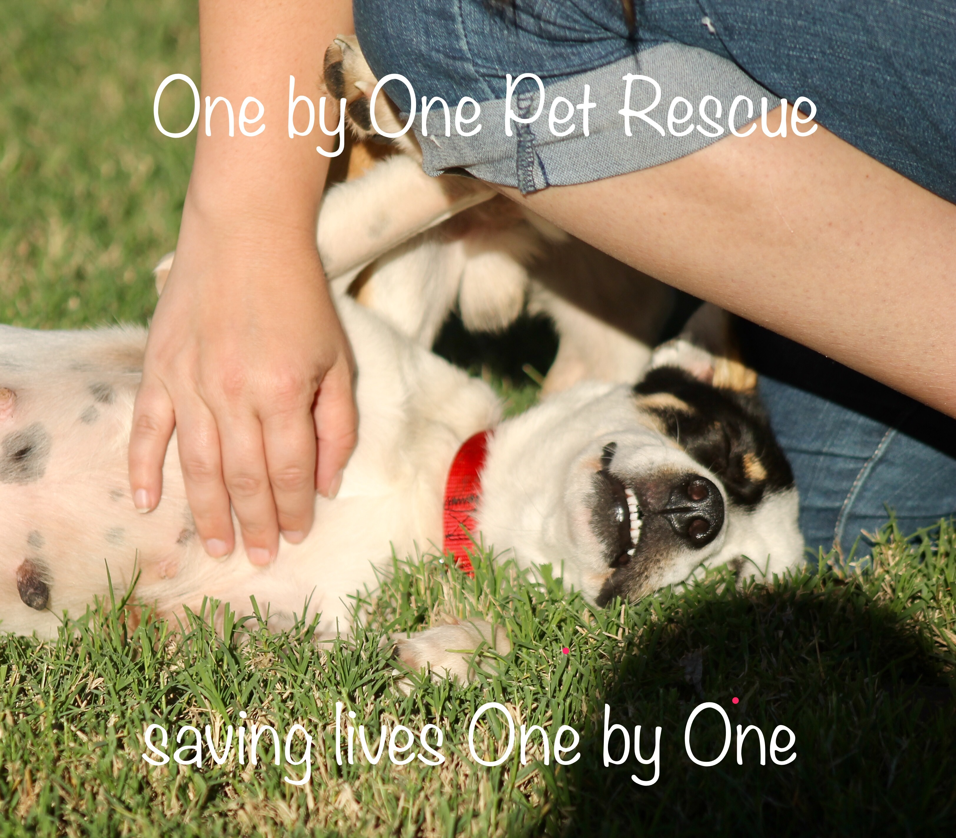 One by One Pet Rescue