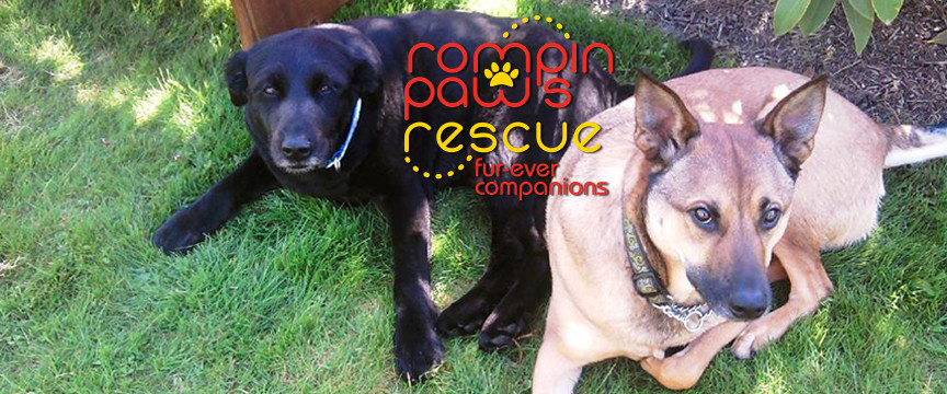 Rompin Paws Rescue