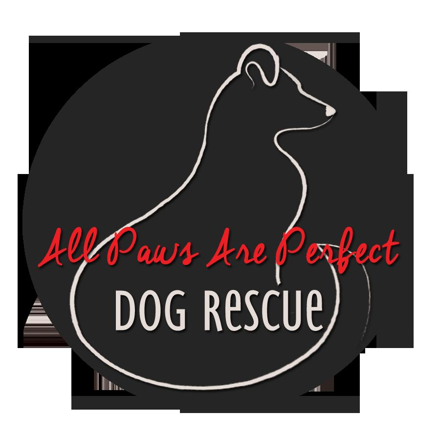 All Paws Are Perfect Rescue
