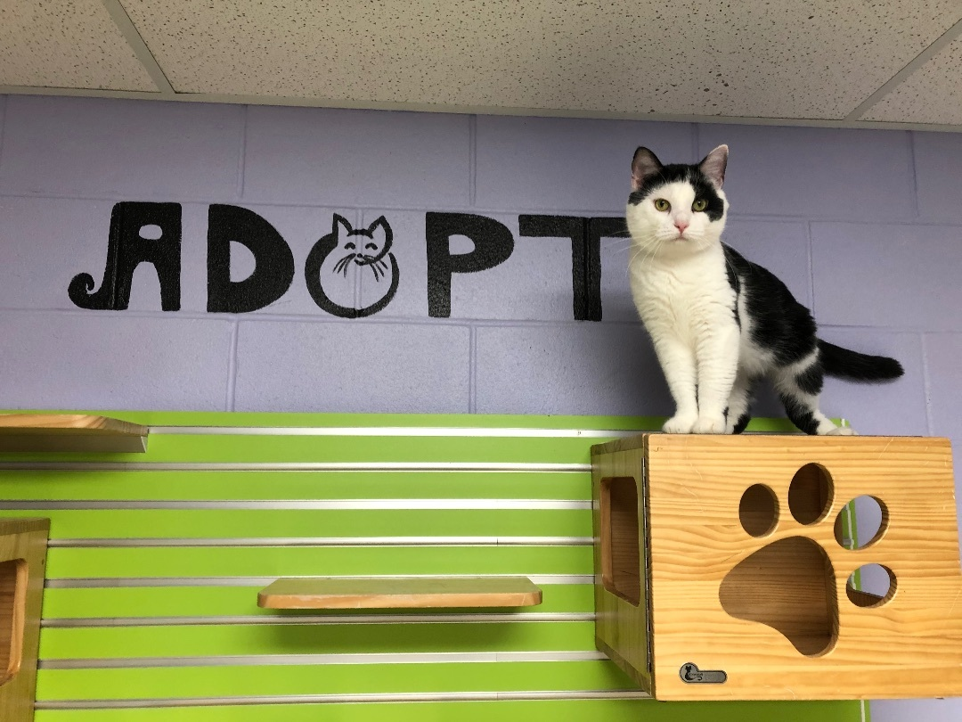 Isle of Wight County Animal Services