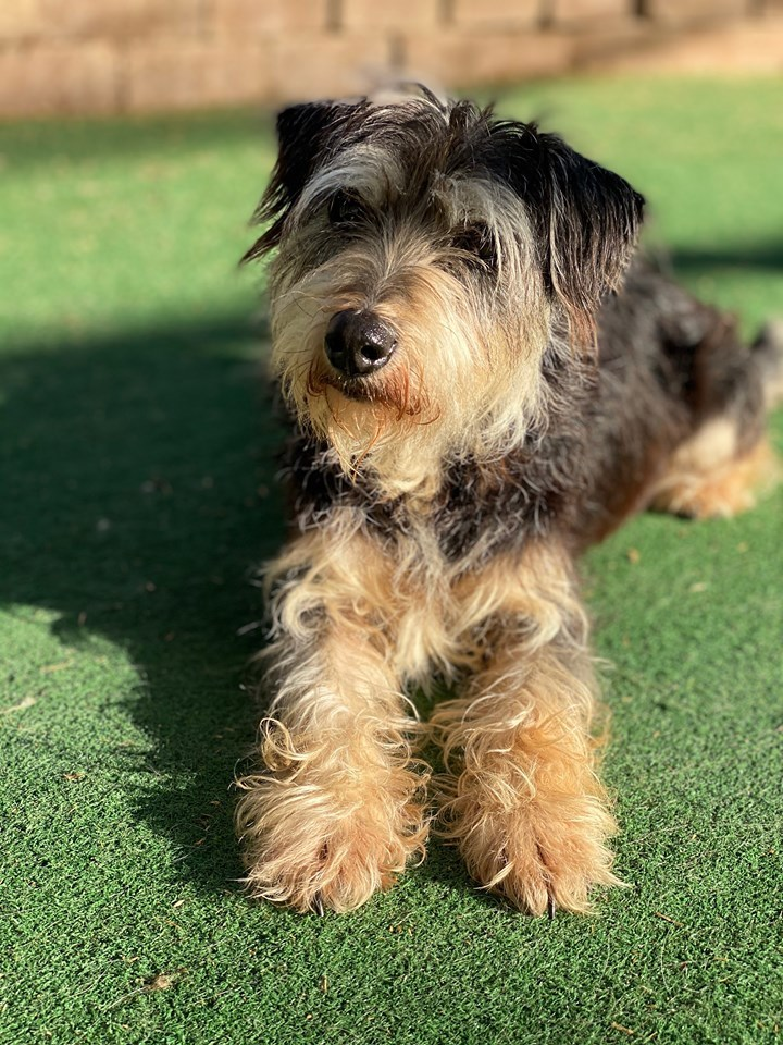 Pets for Adoption at CAMO - Rescue, in Houston, TX | Petfinder