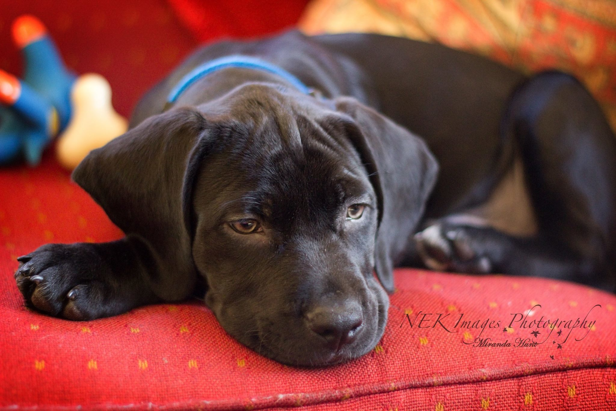 Pets for Adoption at VT Dog Rescue, in Hinesburg, VT ...