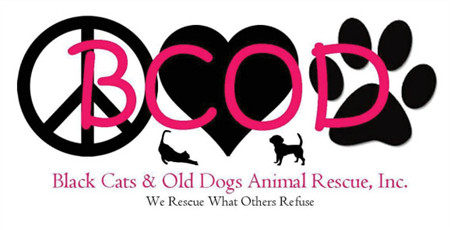 Black Cats & Old Dogs Animal Rescue