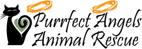 Purrfect Angels Animal Rescue