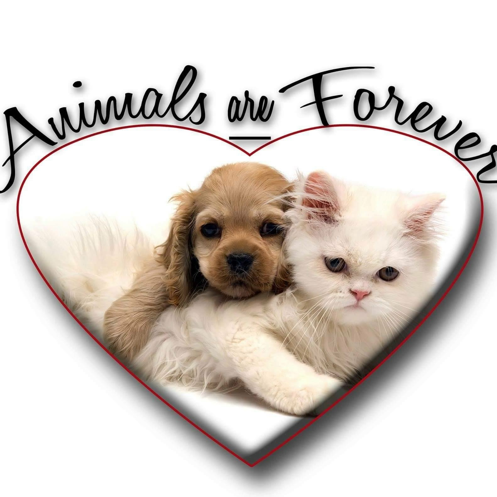 Animals Are Forever, Inc
