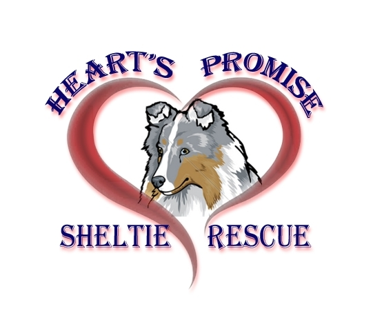 Pets For Adoption At Heart S Promise Sheltie Rescue In New Castle