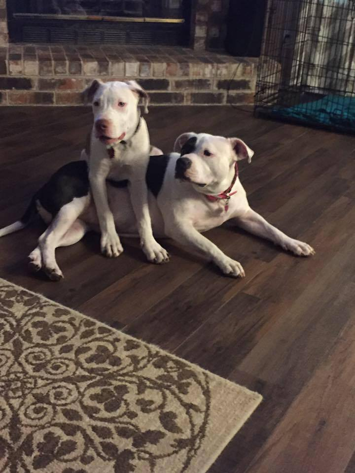 Here is sweet Cici and Amigo her little sidekick.