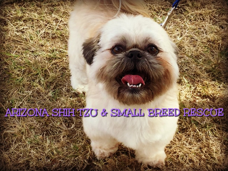 Pets For Adoption At Arizona Shih Tzu And Small Breed Rescue In