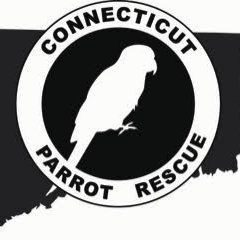 Pets for Adoption at Connecticut Parrot Rescue, in Stratford, CT