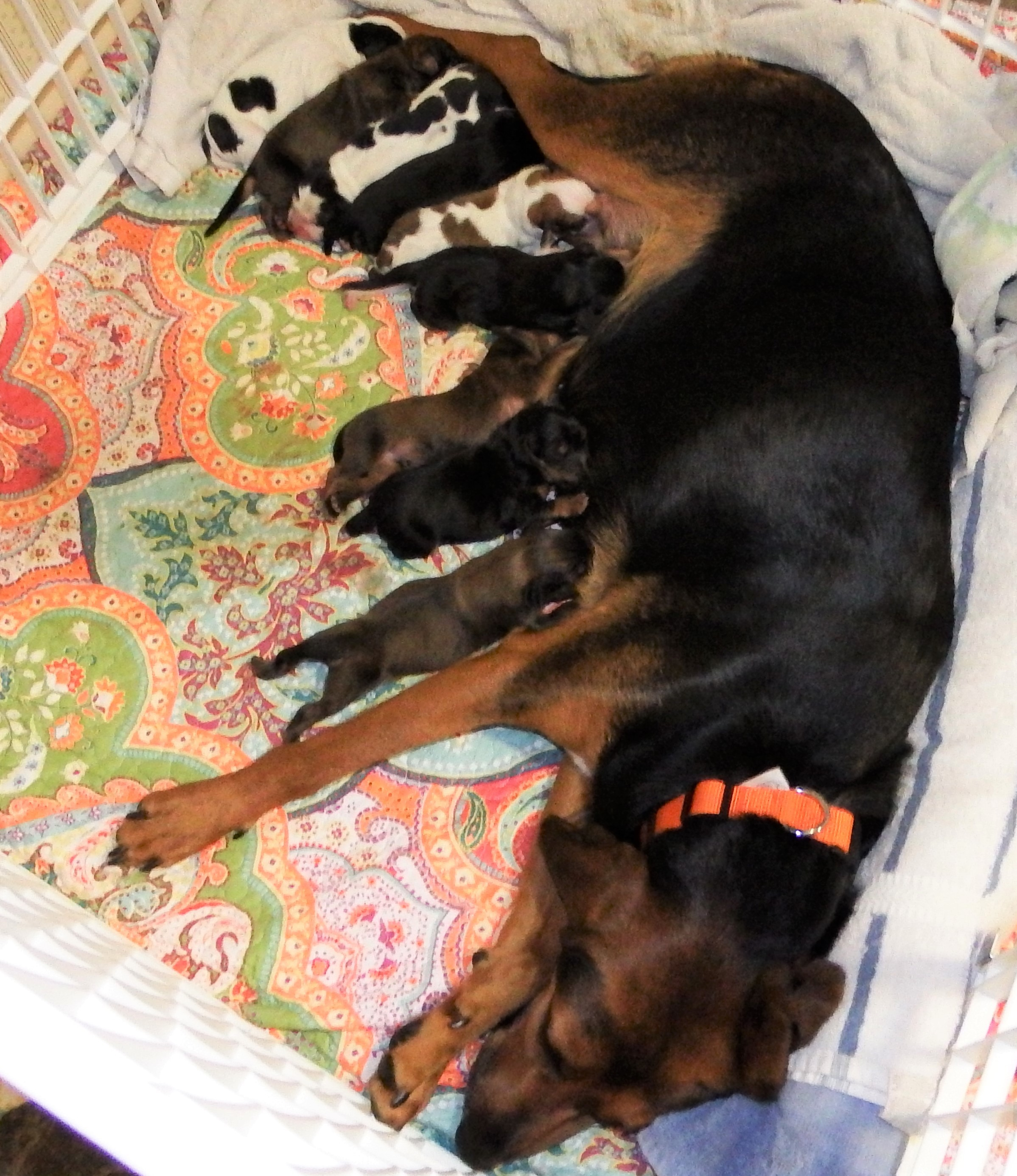 Pets for Adoption at New2U Rescues, in Rochester, NY   Petfinder