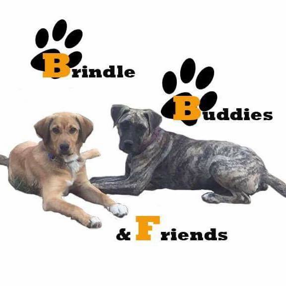 Brindle Buddies and Friends
