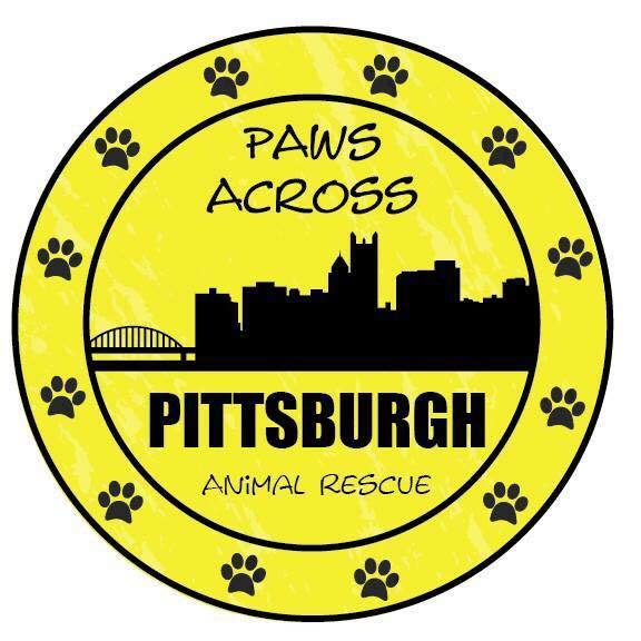 Pets for Adoption at Paws Across Pittsburgh, in Springdale
