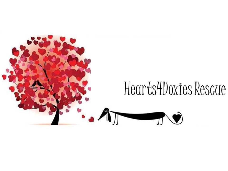 Hearts4Doxies Rescue