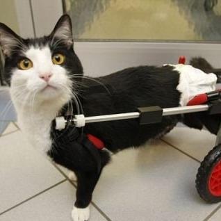 pets for adoption at snap cats in santa rosa ca petfinder