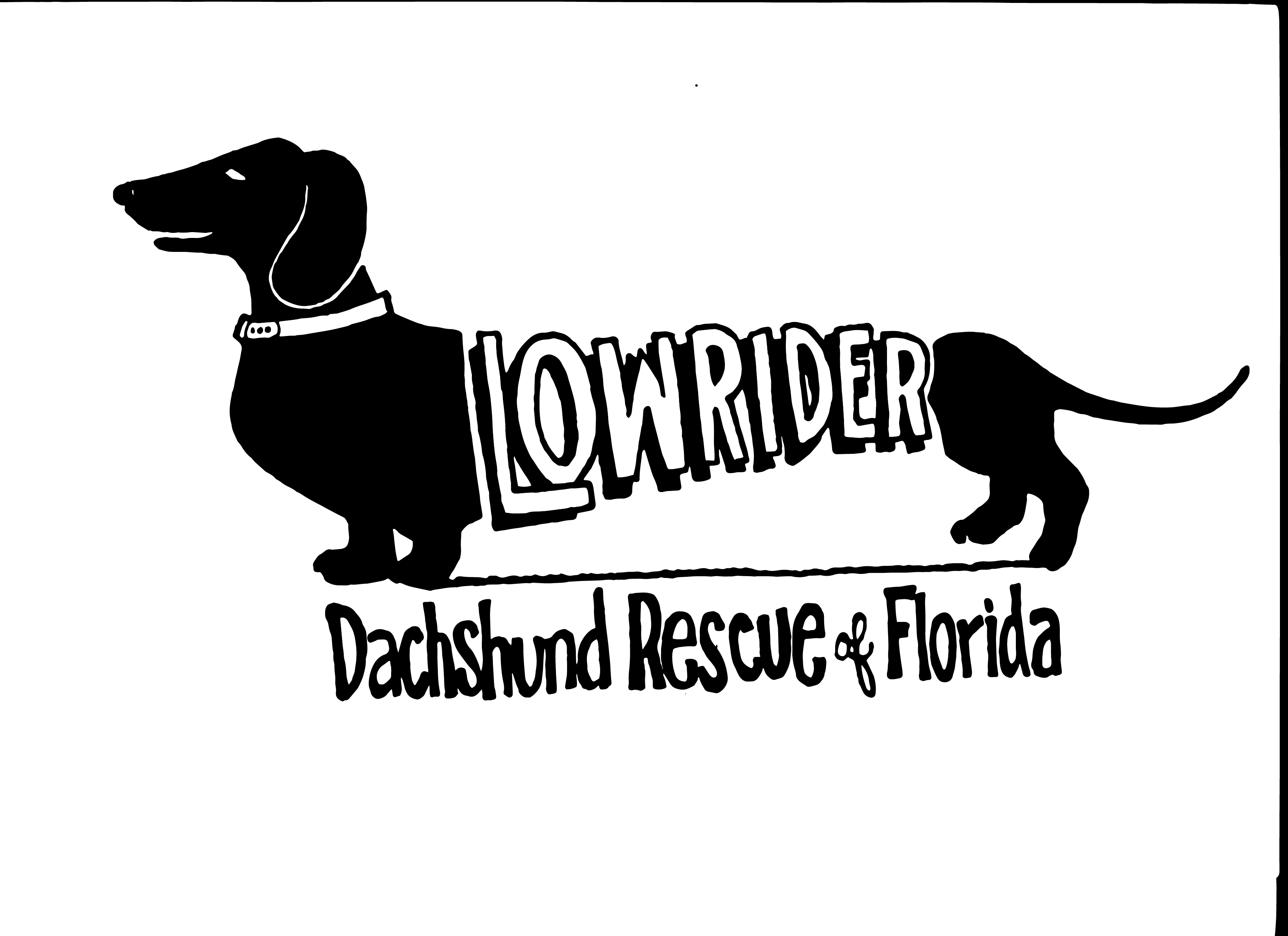 Pets For Adoption At Low Rider Dachshund Rescue Of Florida In