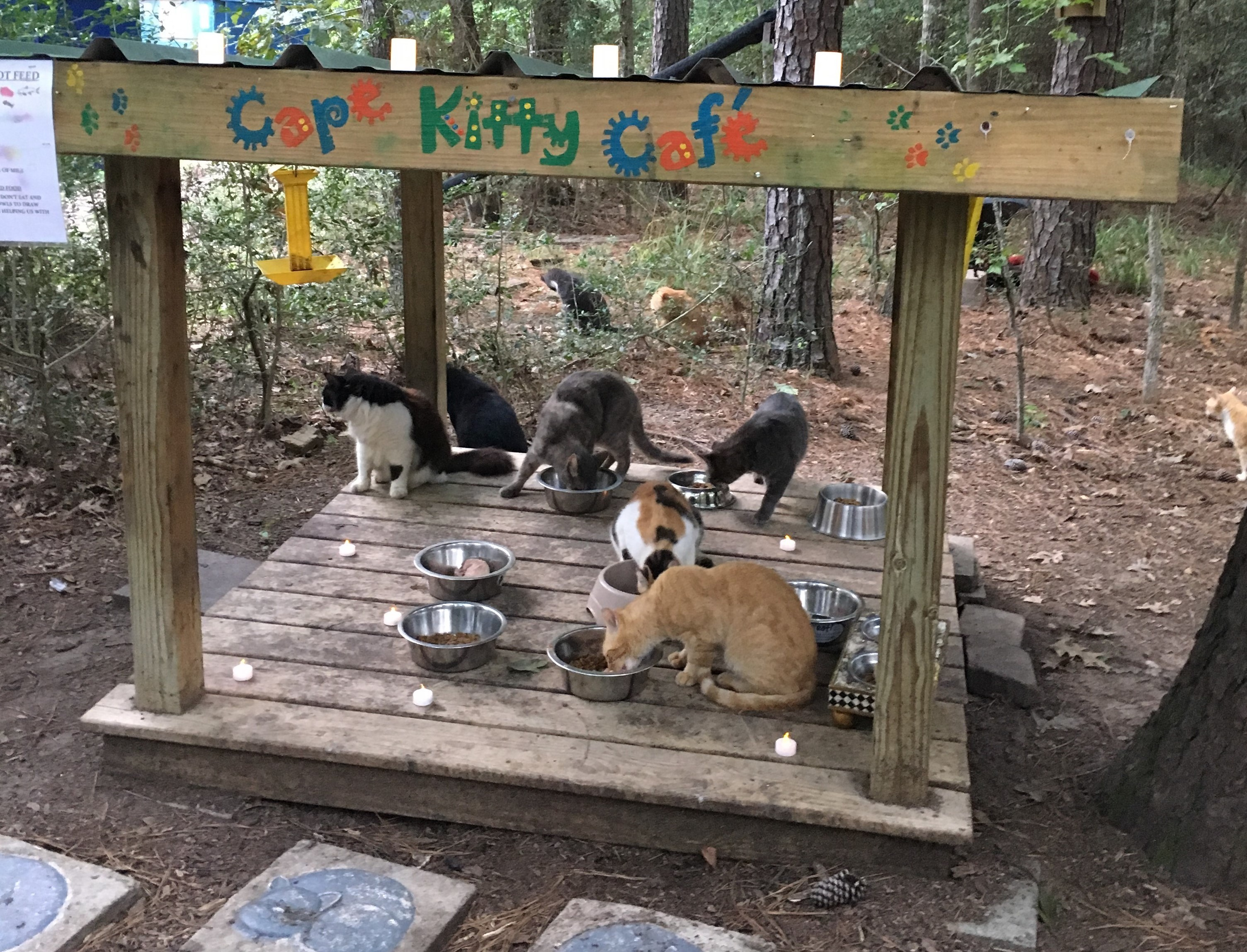 At Cape Kitty Cafe, cats are fed 2 times daily
