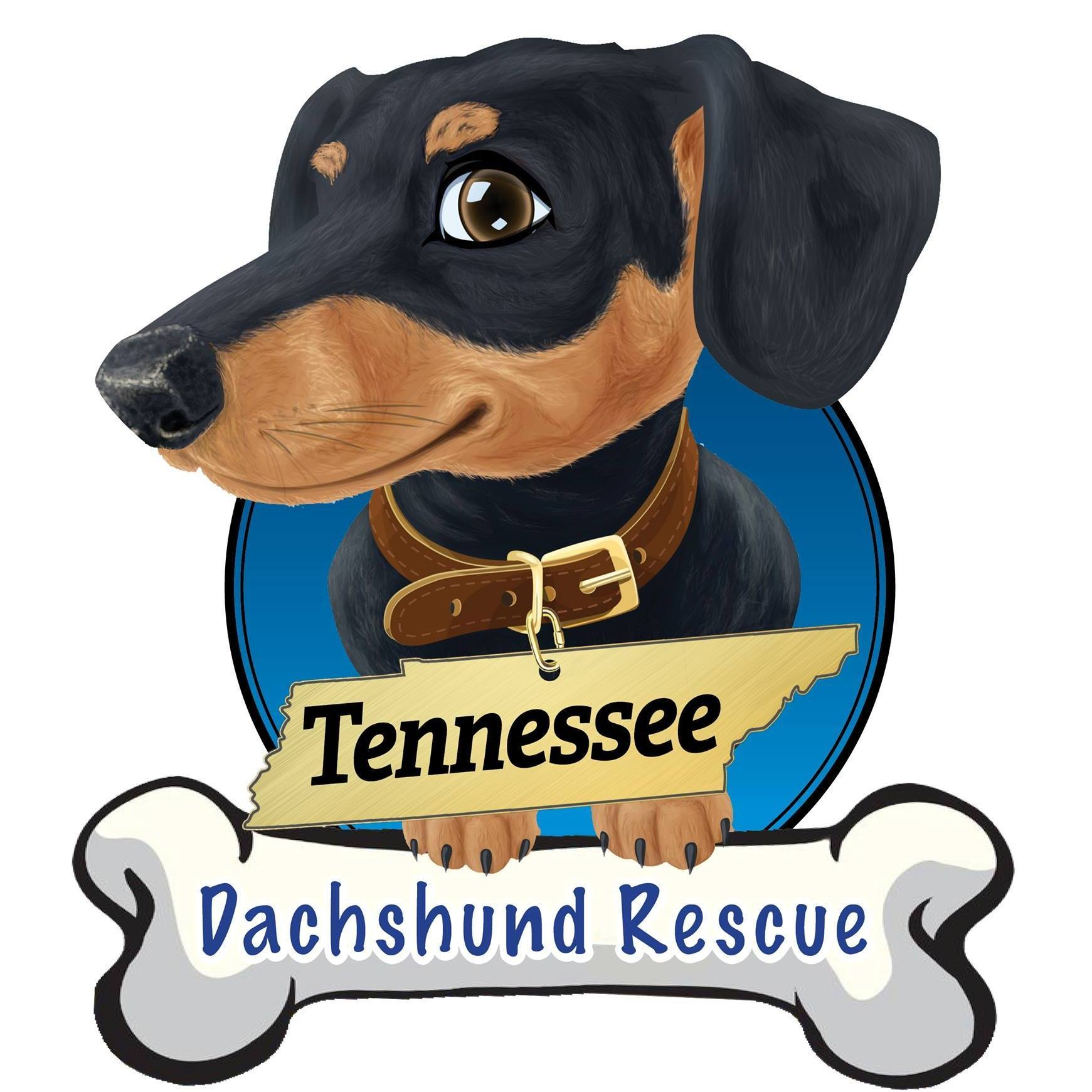 Pets for Adoption at Tennessee Dachshund Rescue, in
