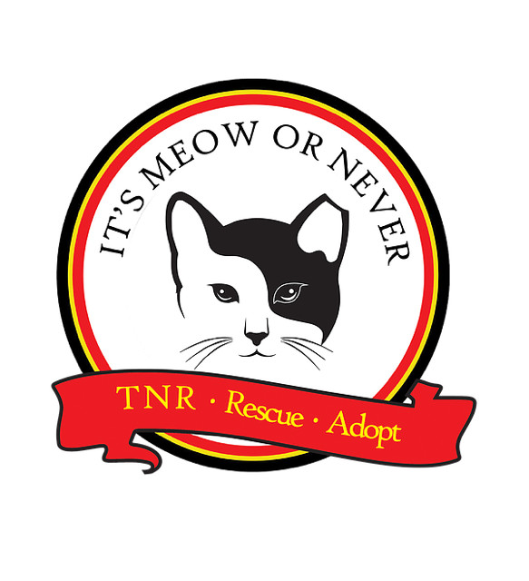 Its Meow or Never for Ferals, Inc.
