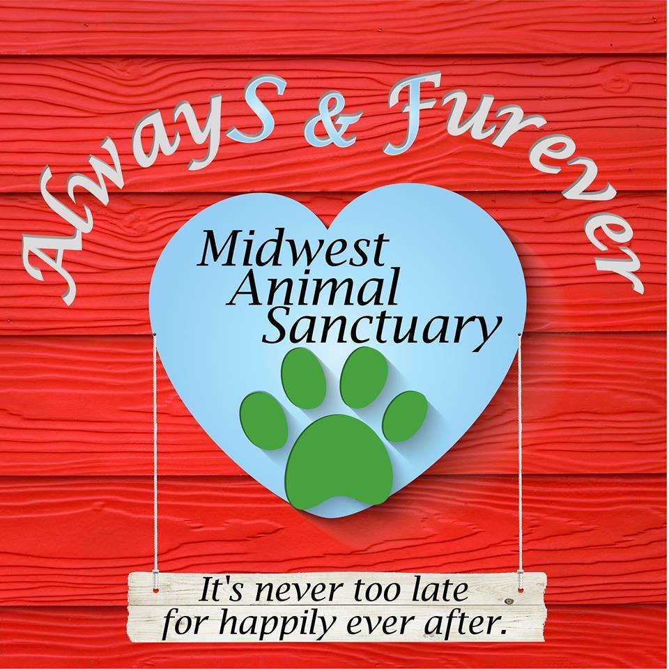 Pets for Adoption at Always and Furever Midwest Animal Sanctuary, in