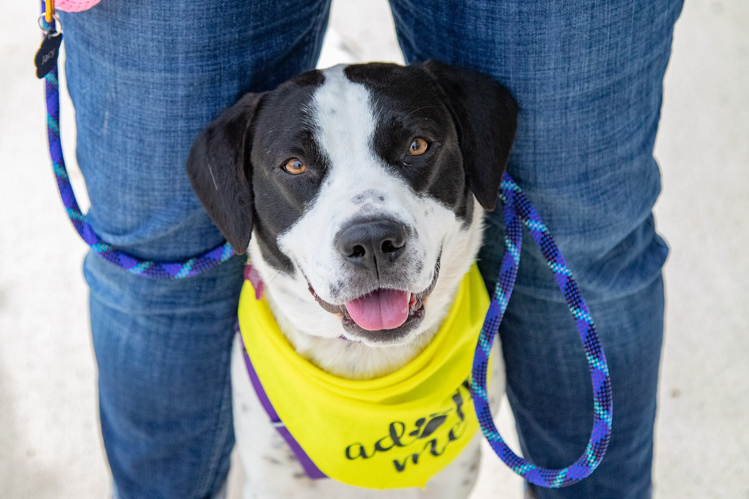 Mabel is a one year old sweetheart!