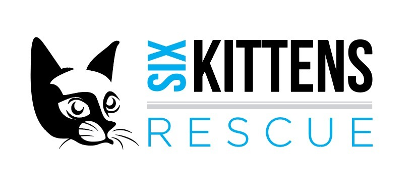 Six Kittens Rescue