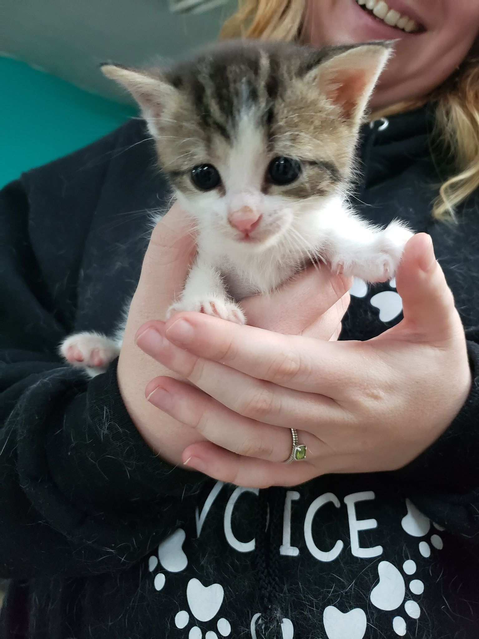 Day One Animal Rescue