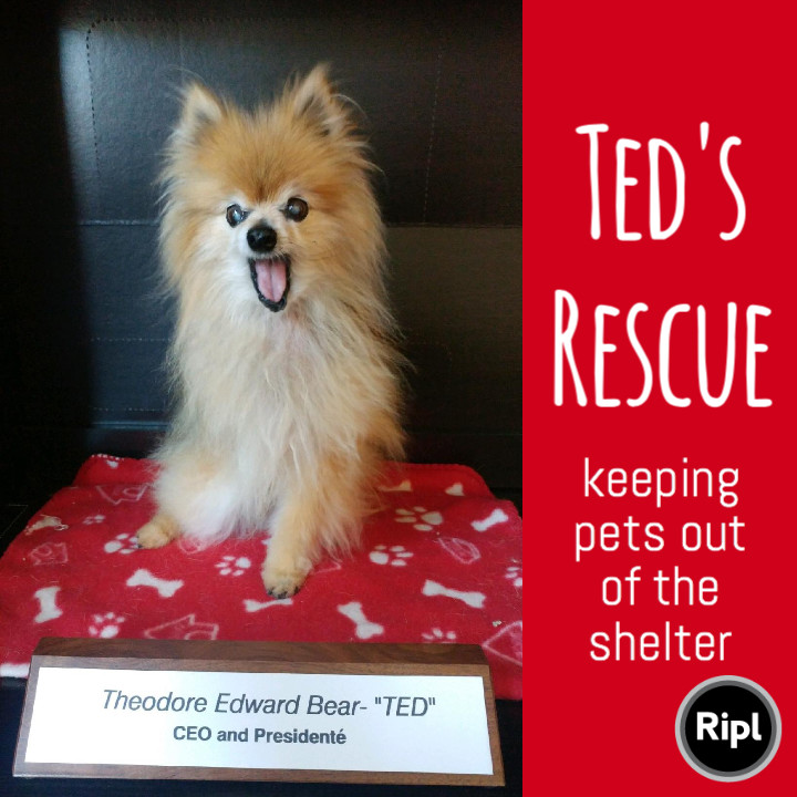 Ted's Rescue