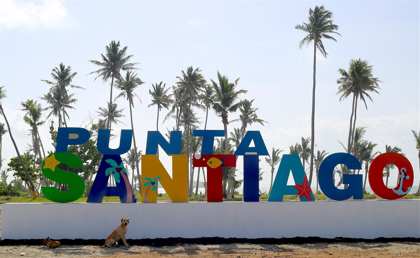 Our dogs come from Punta Santiago, Puerto Rico.