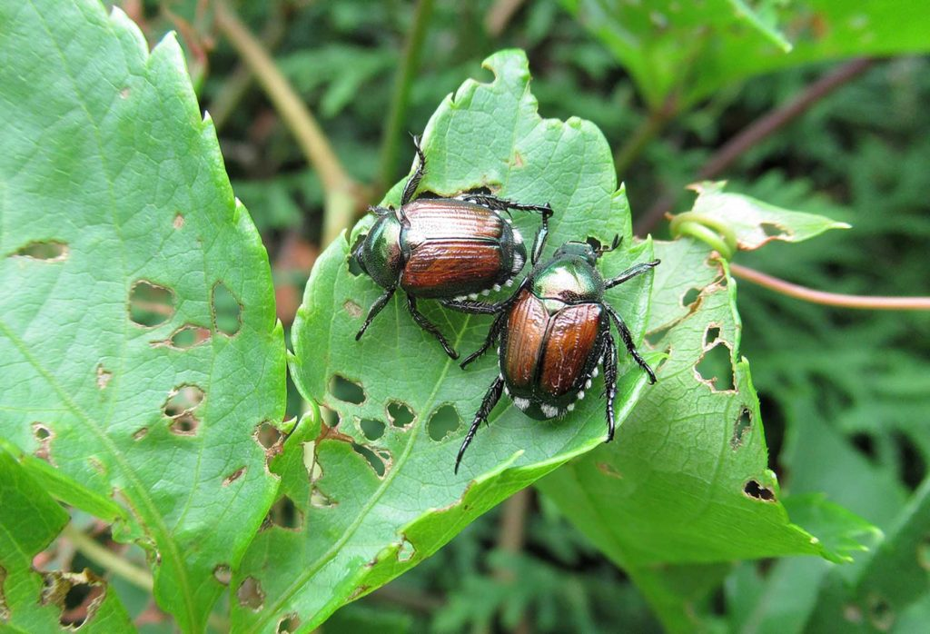 Dealing with common plant diseases