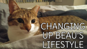 changing-up-beaus-lifestyle
