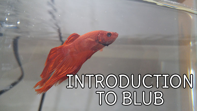 Introduction to Blub