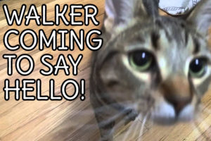 walker-coming-to-say-hello
