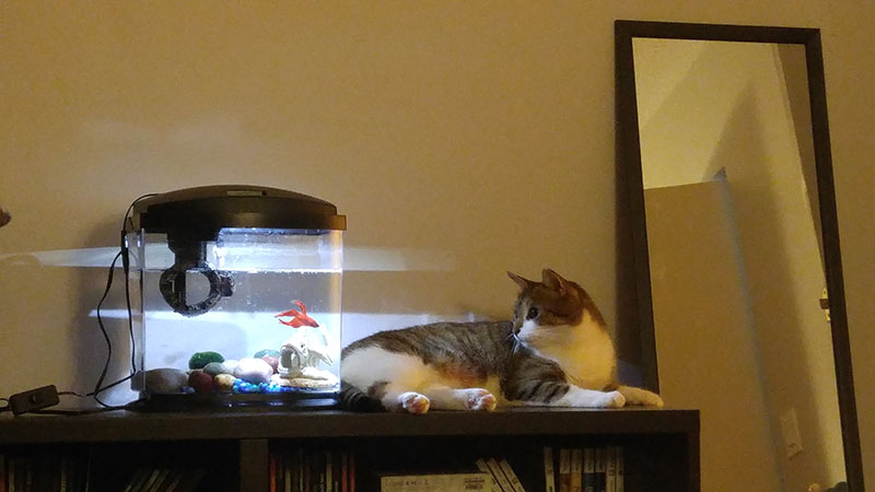 beau-cat-blub-fish-tank