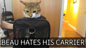 Beau Hates His Carrier