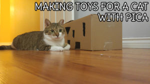 making-toys-with-a-cat-with-pica