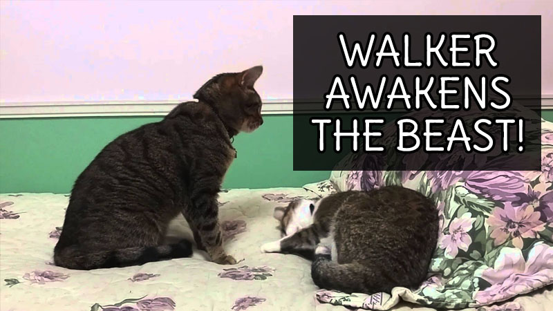 VIDEO: Walker Awakens the Beast!