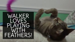 VIDEO: Walker Loves Playing With Feathers
