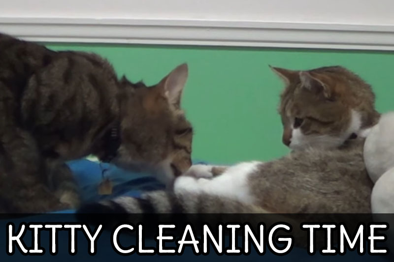 VIDEO: Kitty Cleaning Time