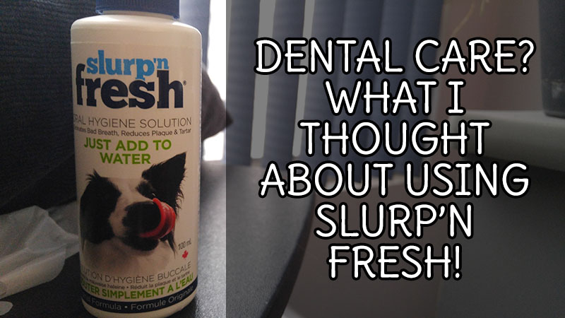 Dental Care? What I Thought About Using Slurp'n Fresh!