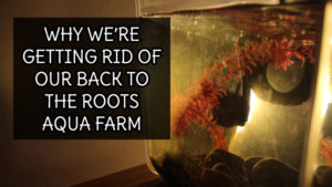 Why We're Getting Rid of Our Back to the Roots Aqua Farm