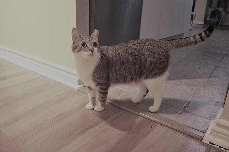 beau-coming-out-kitchen-cat-kitten-horseshoe