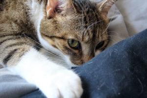beau-mad-woken-up-sleepy-cat-kitten