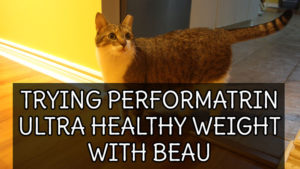 trying-performatrin-ultra-healthy-weight-with-beau