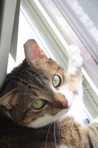 beau-wide-eye-kitten-cat-horseshoe-kitty