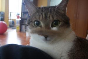 senior-beau-wearing-moustache-kitten-cat